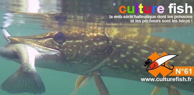 culture fish 61