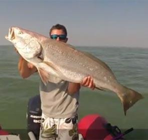 maigre pour Culture Fish 62