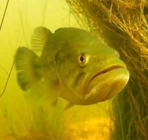plongée avec les bass du lac de Peyre
