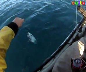 pêche de la pélamide en kayak à Nice